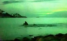 Lucky Human Witnesses the Magical Moment Whales Dance Under Northern Lights