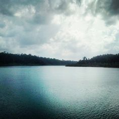 The mangrove forests alongside the creeks en route Jolly Buoy island from Port Blair.