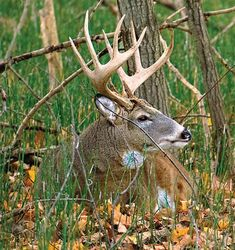 Hunting Tips: Whitetail Tips- How to Map Your Hunting Area Whitetail Deer Hunting, Quail Hunting, Deer Hunting Tips, Whitetail Bucks, Turkey Hunting, Hunting Gear, Hunting Stuff, Archery Hunting, Moose Hunting