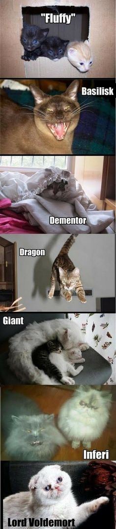 i like the dragon and voldemort the best - - Memes Harry Potter Humour Harry Potter, Harry Potter Characters, Harry Potter Fandom, Funny Animal Pictures, Funny Animals, Cute Animals, Funny Cats, Hogwarts, Fans D'harry Potter