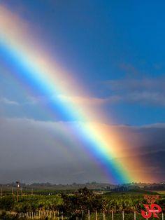 Maui Rainbow  マウイ島虹