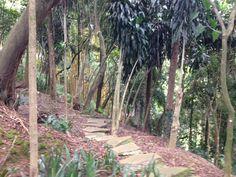 vista do bosque na outra lateral da casa
