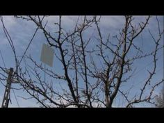 Az őszibarackfa levéltetű elleni védelme - YouTube Youtube, Youtube Movies