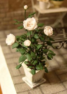 #Miniature #Roses P4180016.jpg #garden