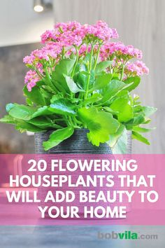 indoor flowers Expand your indoor gardening skills beyond leafy green houseplants and inject some color into your home. Here are 20 flowering houseplants that will add beauty to your home. Flower Pots, Indoor Flowers, Indoor Flowering Plants, Houseplants, Plants, Plant Decor Indoor, Easy Care Plants, Planting Flowers, Home Flower Arrangements