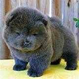 Cute dogs are enough to brighten anyone's day. I dare you not to smile at these cute dogs. Don't you just want to hug these super cute dogs? Cute Baby Animals, Animals And Pets, Funny Animals, Wild Animals, Beautiful Dogs, Animals Beautiful, Cute Puppies, Dogs And Puppies, Puppies Gif