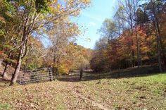 Land for Sale near Sandy Hook, Kentucky - Elliott County  - 206 acres - 1143913  East of Lexington south of I64.