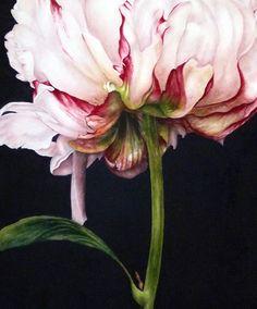 Art peony watercolour print botanical art Peony by BlueShedStudio