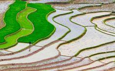 Ryżowe pola mokną w wodzie - http://janadamski.eu/2016/03/ryzowe-pola-mokna-w-wodzie/