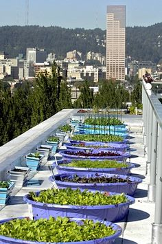 Roof top garden, http://www.cityfarmer.info/2008/05/26/rocket-science-%e2%80%93-an-edible-rooftop-garden-in-portland/
