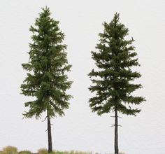 pine vs fir tree