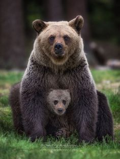 "beautiful-wildlife: ""Family Portrait by © Dmitry Arkhipov "" - Tiere - Chien Animals And Pets, Baby Animals, Funny Animals, Cute Animals, Baby Pandas, Strange Animals, Nature Animals, Interesting Animals, Love Bear"