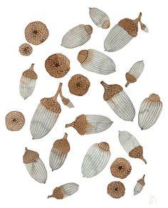 "redpenscommaredshoes: "" ""Acorns and Caps"" original watercolor painting by Holly Ward Bimba at GollyBard """