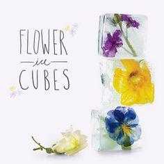Fruits and Flowers Ice Cubs!    http://cozinhasagitariana.blogspot.com/2012/02/cubos-de-gelo-florais.html