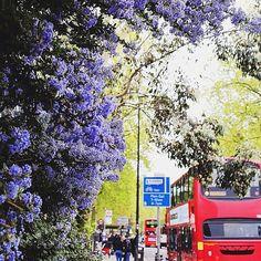 39 luscious photos of London's busy, beautiful April