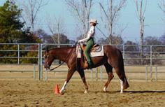 H Gold: Horsemanship Training | @EquiSearch.com