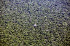 An aerial view shows a tree with white branches in the Amazon rainforest in Mato Grosso state, western Brazil, on October 2, 2015.