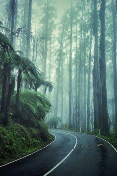 The road through the Black Spur on the way to Alexandra Victoria Australia Claude Monet, Vincent Van Gogh, Wallpapers Wallpapers, Bali, Brandon Woelfel, Photo Awards, Tumblr, Victoria Australia, Grand Tour