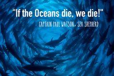 Beyond Whale Wars: Inside Sea Shepherd's Global Movement Defending Diversity in the Oceans. http://www.onegreenplanet.org/animalsandnature/sea-shepherd-a-global-movement-defending-diversity-in-the-oceans/ #SeaShepherd #defendconserveprotect