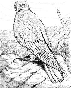 free coloring pages storm hawks - photo#3