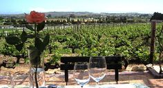 On the third day of your Cape Town tour, you'll visit the Neethlingshof Wine Estate for a fabulous wine tasting. Cape Town, Wine Tasting, South Africa, Safari, Third, Vineyard, Wildlife, Romantic, Explore