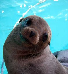 awwww ~ cute face of a baby Sea Lion
