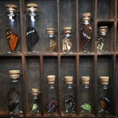 Tiny collections of butterfly wings. by thenaturalistmelb Objet Harry Potter, Cabinet Of Curiosities, Natural Curiosities, Nature Collection, Rock Collection, Witch Aesthetic, Displaying Collections, Butterfly Wings, Wiccan