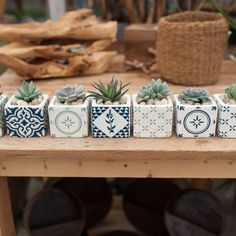 Find Succulents, plus ethically home-grown, high impact colour for your garden, unique hanging baskets + gorgeous home decor at West Coast Gardens. #HomeDecor