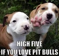 High Five! #welove_pitbulls #pitbullsofinstagram #pitbullpuppy #pitbull