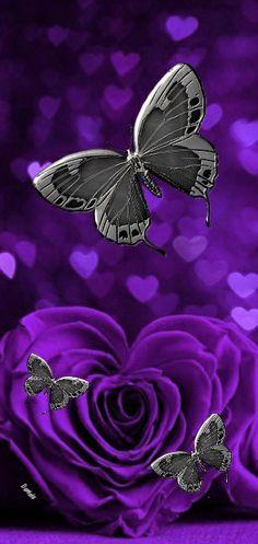 Butterflies, Wallpaper, Board, Floral, Flowers, Plants, Jewelry, Wallpaper Backgrounds, Jewlery