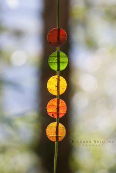 Richard Shilling tájművész csodaszép levélszobrai | Életszépítők