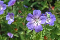 Langbloeiers Gardening, Fruit, Lawn And Garden, Horticulture, Square Foot Gardening, Garden Care