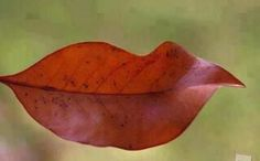 Love the lips!    (It's a leaf! kn)