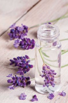 Lavender body care 4 How to make Lavender  solid perfume.