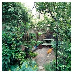 shaded courtyard garden