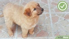Easy Steps to Potty Train Your… #dogtrainingcourse