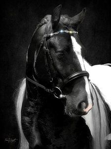Horse Photograph - Valentino's Bling by Fran J Scott