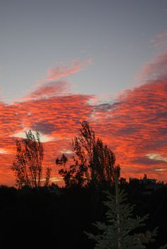 """""""Nature painted red 2"""" Athens (2015) Photography  by Anda Anastasopoulou.  Anda Anastasopoulou - Google+ https://plus.google.com/104006191383272659096"""