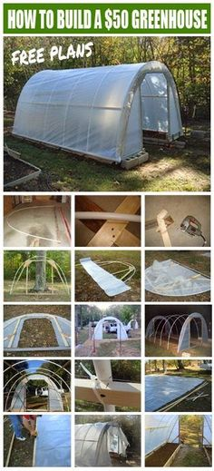 How to build My 50 Dollar Greenhouse