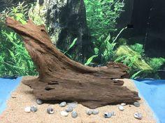 Aquarium Driftwood Orchids Terrarium Craft Art #aquariumdriftwood #etsy #etsymnnt https://www.etsy.com/listing/458549276/aquarium-driftwood-145-x-9-x-4-for Etsy