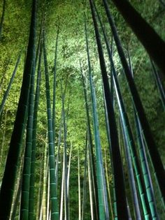 高台寺竹林のライトアップ