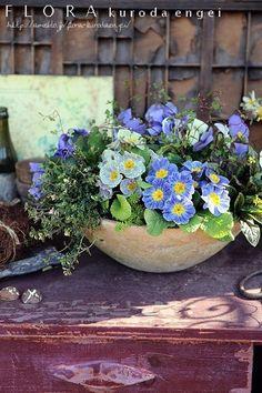 Flora Design, Flower Pots, Flowers, Container Gardening, Planter Pots, Succulents, Plants, Hummingbird, Gardens