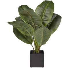 Real Touch Rubber Plant (605 MXN) ❤ liked on Polyvore featuring home, home decor and filler