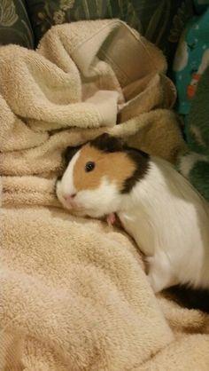 Piggy!!!!