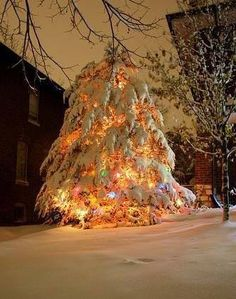 Snow covered Christmas Tree!