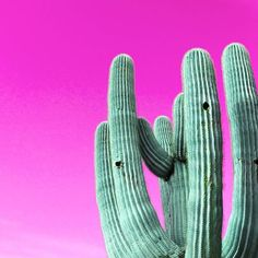 Pic via Lalafauxbois. Colour Bright Inspo Inspiration Paint Decor Minimal Candy Colourful Color Colorful Cactus Cacti Color Colorful Desert Pink Plant Greenthumb