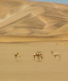 Wheretostay Namibia: Travel Planner & Routes into Namibia Beautiful Places In The World, Wonderful Places, Solo Travel, Travel Usa, Land Of The Brave, Deserts Of The World, Singles Holidays, Namib Desert, Single Travel