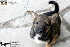 Tierheim Sirius mit 2500 Tieren bittet dringend um Hilfe!!!