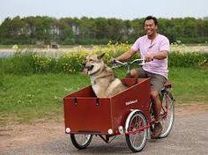 Image result for dutch cargo bike dog
