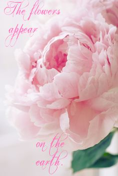 57 best song of solomon images on pinterest bible verses colors the flowers appear on the earth the time of the singing of birds mightylinksfo